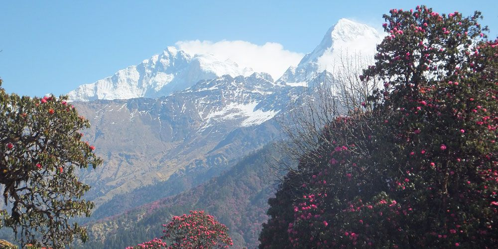 GHOREPAI POONHILL TREKKING- SEE THE BEAUTY AND  NATURE THIS SPRING