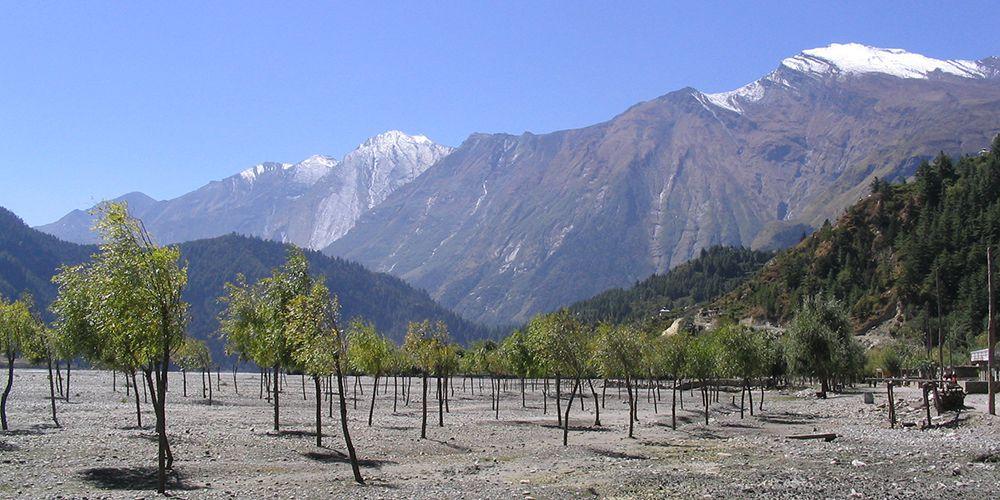 Apple Garden in Kali Gandaki Valley!